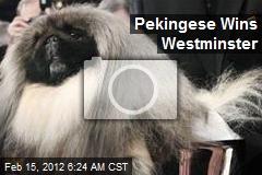 Pekingese Wins Westminster