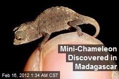 Mini-Chameleon Discovered in Madagascar