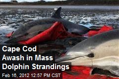 Cape Cod Awash in Mass Dolphin Strandings