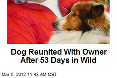Dog Reunited With Owner After 53 Days in Wild