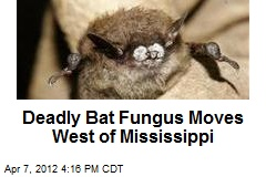 Deadly Bat Fungus Moves West of Mississippi