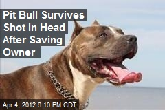 Pit Bull Survives Shot in Head After Saving Owner