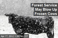Forest Service May Blow Up Frozen Cows