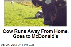 Cow Runs Away From Home, Goes to McDonald's
