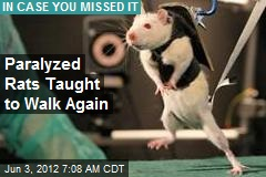 Paralyzed Rats Taught to to Walk Again