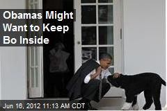 Obamas Might Want to Keep Bo Inside