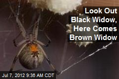 Look Out Black Widow, Here Comes Brown Widow