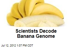 Scientists Decode Banana Genome
