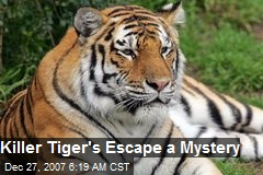 Killer Tiger's Escape a Mystery