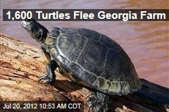 1,600 Turtles Flee Georgia Farm