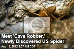Meet 'Cave Robber,' Newly Discovered US Spider