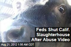 Feds Shut Calif. Slaughterhouse After Abuse Video