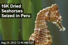 16,000 Dried Seahorses Seized in Peru