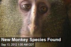 New Monkey Species Found