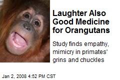 Laughter Also Good Medicine for Orangutans
