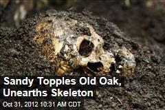 Sandy Topples Old Oak, Unearths Skeleton