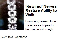 'Rewired' Nerves Restore Ability to Walk