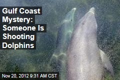 Gulf Coast Mystery: Someone Is Shooting Dolphins
