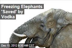 Freezing Elephants 'Saved' by Vodka