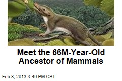 Meet the 66M-Year-Old Ancestor of All Mammals