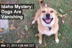 Idaho Mystery: Dogs Are Vanishing