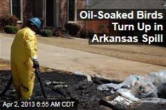 Oil-Soaked Birds Turn Up in Arkansas Spill