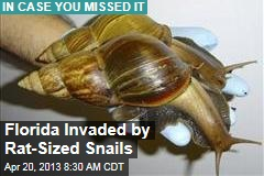 Florida Invaded by Rat-Sized Snails