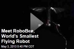 Meet RoboBee, World's Smallest Flying Robot