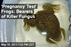'Pregnancy Test' Frogs: Bearers of Killer Fungus