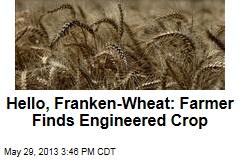 Hello, Franken-Wheat: Farmer Finds Engineered Crop