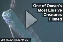 One of Ocean's Most Elusive Creatures Filmed