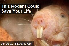 This Rodent Could Save Your Life