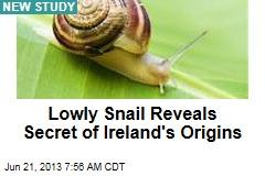 Lowly Snail Reveals Secret of Ireland's Origins