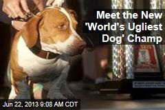 Meet the New 'World's Ugliest Dog' Champ