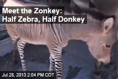 Meet the Zonkey: Half Zebra, Half Donkey