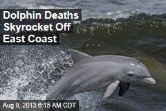 Dolphin Deaths Skyrocket Off East Coast