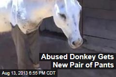 Abused Donkey Gets New Pair of Pants
