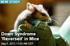 Down Syndrome 'Reversed' in Mice
