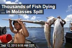 Thousands of Fish Dying ... in Molasses Spill