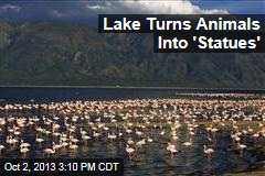 Lake Turns Animals Into Creepy 'Statues'