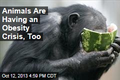 Animals Are Having an Obesity Crisis, Too