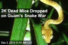 2K Dead Mice Dropped on Guam's Snake War