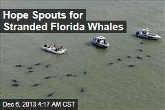 Hope Spouts for Stranded Florida Whales