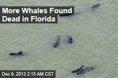 More Whales Found Dead in Florida