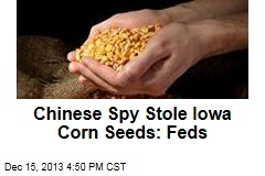 Chinese Spy Stole Special Corn Seeds: Feds
