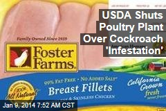 USDA Shuts Poultry Plant Over Cockroach 'Infestation'