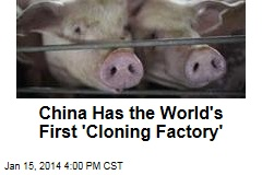 China Has the World's First 'Cloning Factory'
