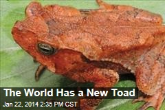The World Has a New Toad