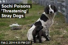 The New Meal for Sochi's Stray Dogs: Poison