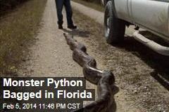 Monster Python Bagged in Florida